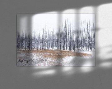 Spikes and grasses Yellowstone von Sjaak den Breeje