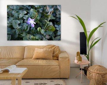 Flowers von Jan Albada