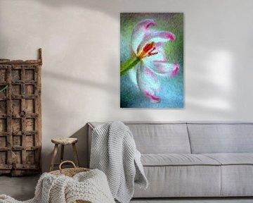 Tulpe von Augenblicke im Bild