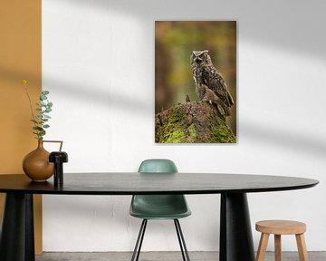 der Schrei... Virginia-Uhu ( Bubo virginianus ) ruft erbost, sitzt auf einem Baumstumpf sur wunderbare Erde