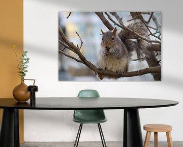 Ein Eichhörnchen in einem New Yorker Park von Charella Hulsbosch