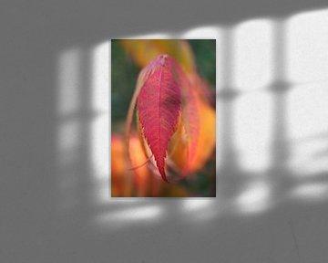 Leaving leaves van Karin Hendriks Fotografie