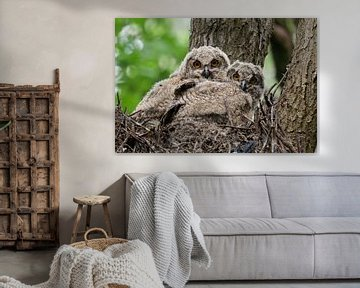 Europaeische Uhus ( Bubo bubo ), zwei Jungvögel, Küken im Nest in einem Baum, Tierkinder von wunderbare Erde