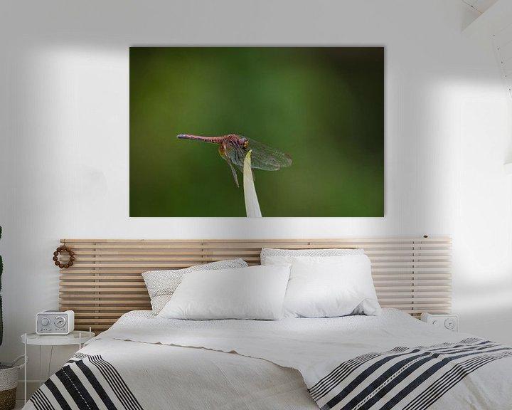 Beispiel: Rote Libelle von Thijs van den Broek