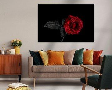 Einsame Rose von Patrick Herzberg