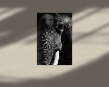 Asiatischer Elefant mit großen weißen Stoßzähnen schließen herauf Porträt von Sjoerd van der Wal