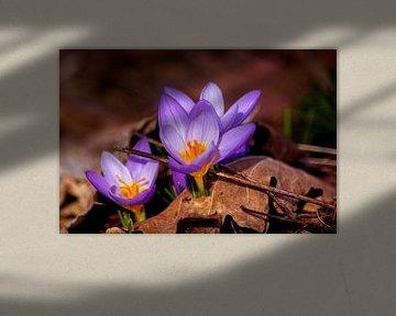Concept nature : Et purpura claritate von Michael Nägele
