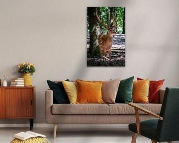 Hert staat parmantig in het bos van Heleen Pennings