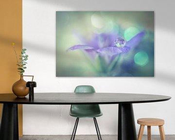 Lila Blume mit Tropfen