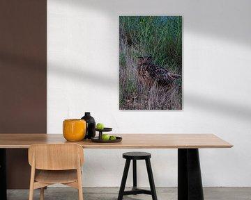 Europaeischer Uhu ( Bubo bubo ), Altvogel am späten Abend, in der Nacht , wildlife von wunderbare Erde