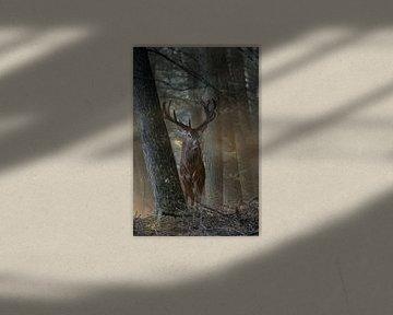 Rothirsch ( Cervus elaphus ) steht nahezu märchenhaft bei schönstem Licht zwischen Bäumen im Wald von wunderbare Erde