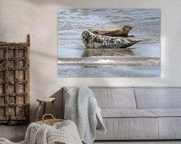 Zeehonden in de Waddenzee von Jeroen van Deel
