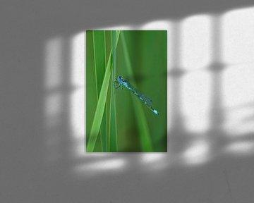 Blauwe libelle in het groen von Jeroen van Deel