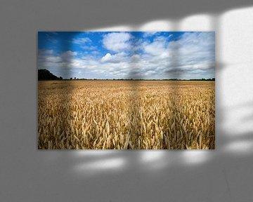 Weizenfeld von Jolene van den Berg