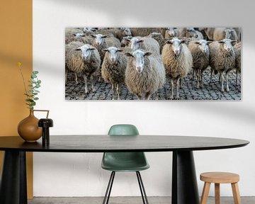 Schafe in einer Reihe sur Hans Brasz