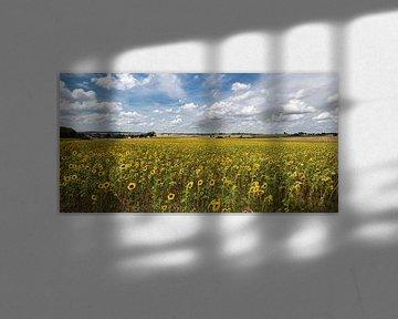Pittoresk zonnebloemveld onder een wit-blauwe zomerhemel van Uwe Ulrich Grün