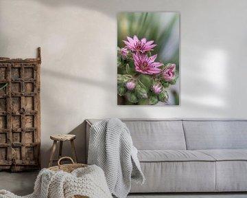 Blume XV van Michael Schulz-Dostal