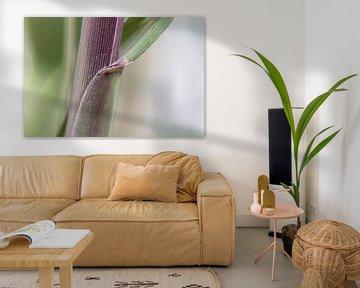 Blume IX - Bambus van Michael Schulz-Dostal