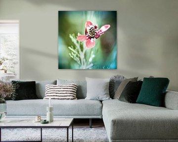 Wind Flower van Nanouk el Gamal - Wijchers (Photonook)