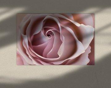 The beauty of a rose van Birgitte Bergman