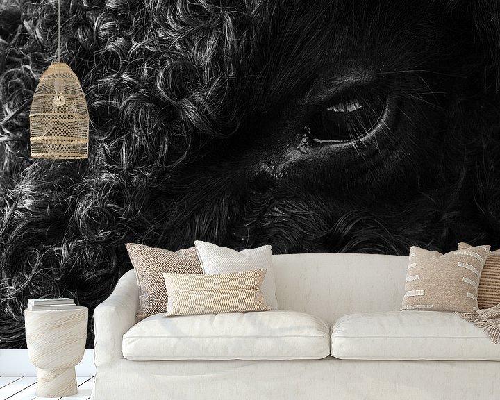 Sfeerimpressie behang: galloway koe van Martzen Fotografie