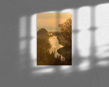 Schwan in goldenen Morgenlicht