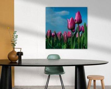 Pink Tulips von Marcel Ohlenforst