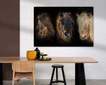 Shetland Pony compilatie Portretten van Gert Hilbink