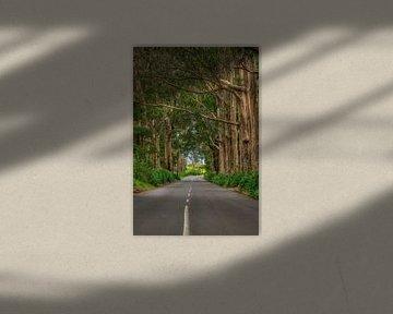 De weg naar Porto Moniz... van Peter Korevaar