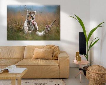 Royal Bengal Tigers ( Panthera tigris ), young cubs, siblings, playing, wrestling, romging in high g van wunderbare Erde