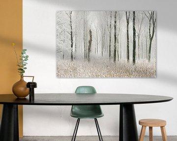 verschneiter Auwald, Bruchwald, Winter in Meerbusch, Ilvericher Altrheinschlinge, Germany, von wunderbare Erde