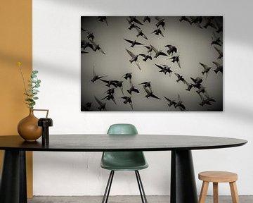 Vogelvlucht spreeuwen van a schotanus