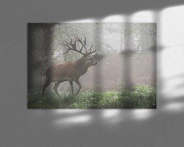 European Red Deer ( Cervus elaphus ), majestic stag, walking through a misty forest, Germany. van wunderbare Erde