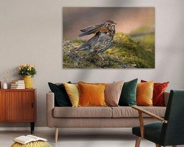 Singdrossel ( Turdus philomelos ) sitzt am Waldboden und hebt die Flügel an, zuckt mit den Schultern von wunderbare Erde