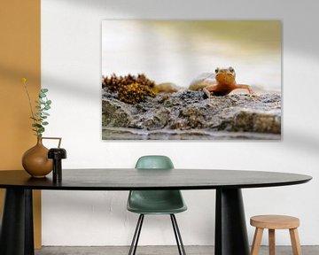 Teichmolch ( Lissotriton vulgaris ) sitt auf einem flachen Stein nahe der Wasserkante und erlubt ein von wunderbare Erde