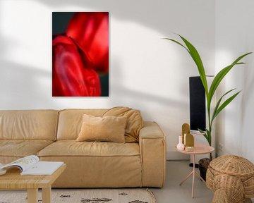 Het stalken van een tulp - een familieportret #16 van Peter Baak