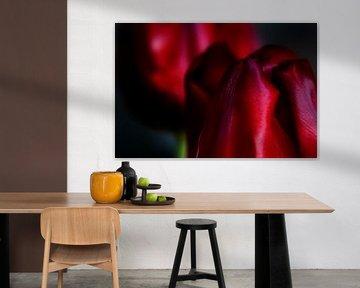 Het stalken van een tulp - een familieportret #18 van Peter Baak