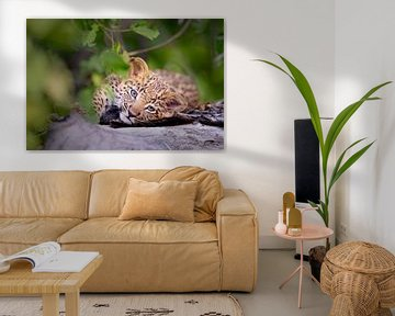 Baby luipaard van Jos van Bommel
