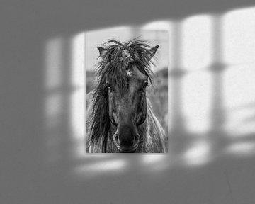 wild horse van Van Karin Fotografie