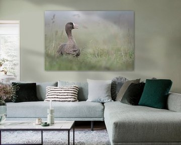 Greater White-fronted Goose ( Anser albifrons ), adult, resting, sitting in high grass of a meadow,  van wunderbare Erde