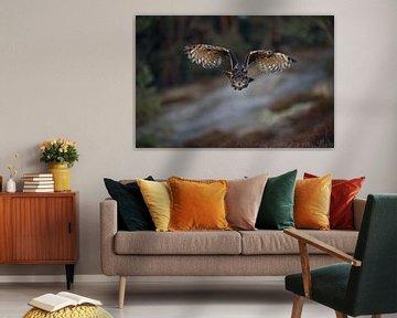 Eagle Owl (Bubo bubo) in hunting flight, frontal view, open wings, bright orange eyes, eye-contact. van wunderbare Erde