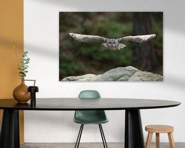 Tawny Owl ( Strix aluco ) in gliding flight, flying through the woods, stretched wings, huge wingspa van wunderbare Erde