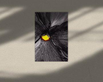 Flower in Black von De Rover