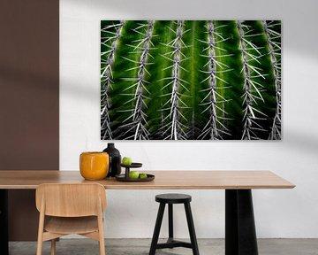 Cactus in Green von De Rover
