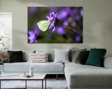 weißer Schmetterling in Lila von lieve maréchal
