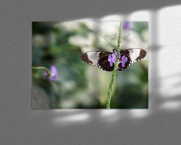 schöner Schmetterling auf purpurroter Blume. von Mariëtte Plat