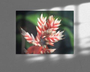 Mooie rood-wit kleurige bloem langs de waterkant. von Mariëtte Plat
