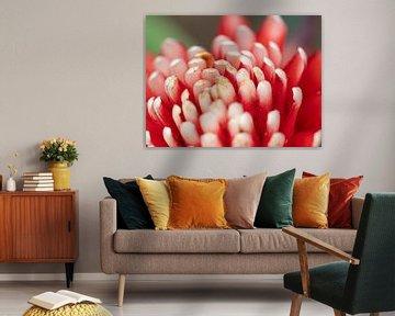 Bijzondere rood-wit kleurige bloem. von Mariëtte Plat