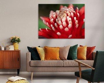 Mooie rood-wit gekleurde bloem. von Mariëtte Plat