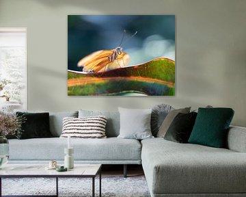 Gele vlinder tegen donkerblauwe achtergrond von Mariëtte Plat